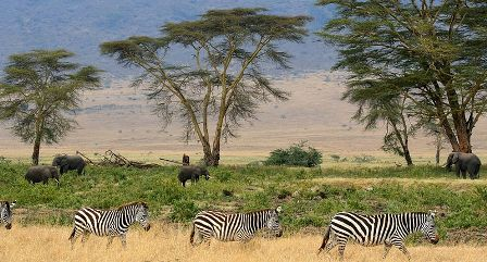 Facts about Africa - Savanna