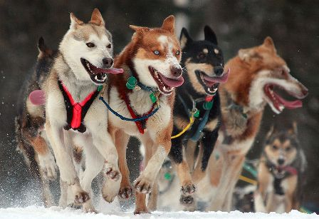 Facts about Alaska - Dog Race