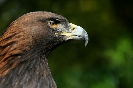 Facts about Albania - Golden Eagle