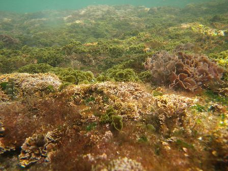 Facts about algae - Seaweeds
