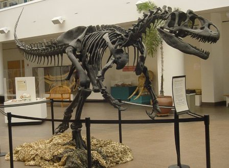 Facts about allosaurus - Allosaurus fossil