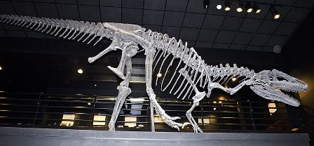Facts about allosaurus - Big Al