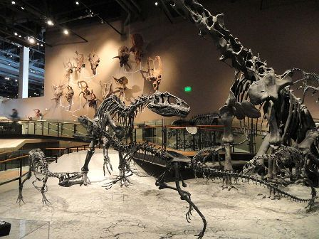 Facts about allosaurus - Fossil displays