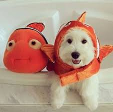 The fish's facial expressions used dog as the model