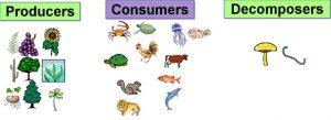 Animals are consumers