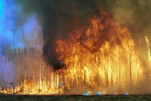 Forest fires spread quickly