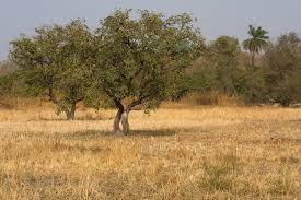 Savanna soil