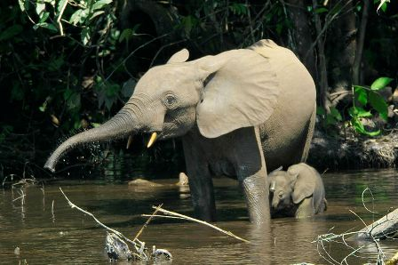Facts about African Elephants - With young elephant