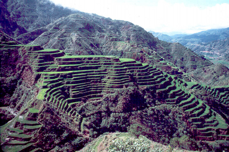 Facts about agriculture - Rice terraces