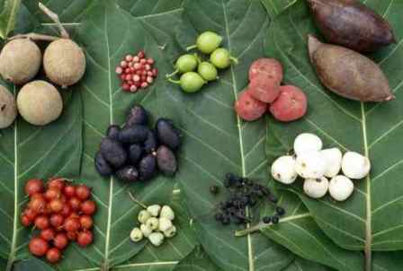Facts about Aboriginal culture - Food