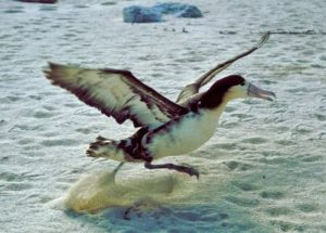 10 Interesting Facts about Albatrosses