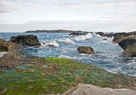 Facts about algae - Coastal rock algae