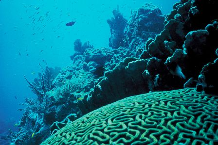 Facts about algae - Coral reefs
