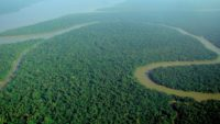 10 Interesting Facts about Amazon Rainforest