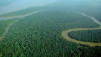 10 Interesting Facts about Amazon Rainforest
