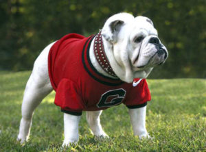 The University of Georgia's New Mascot
