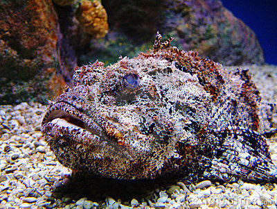 10 interesting facts about fish 10 interesting facts for Stone fish facts