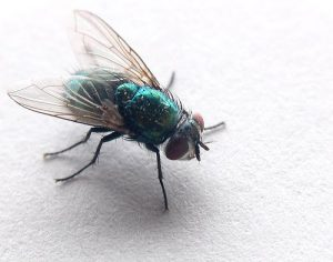 The appearance of fly