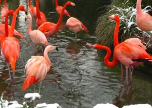 10 Interesting Facts about Flamingos