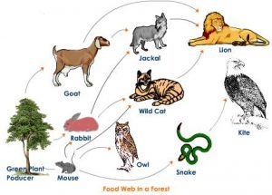 Food web in a forest