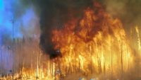 10 Interesting Facts about Forest Fires