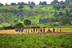 Agriculture in Central African Republic