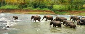 The fauna in Central African Republic