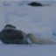 10 Interesting Facts about Harp Seals