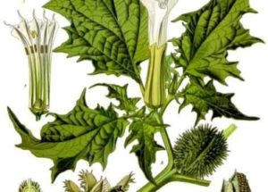 10 Interesting Facts about Herbal Medicine