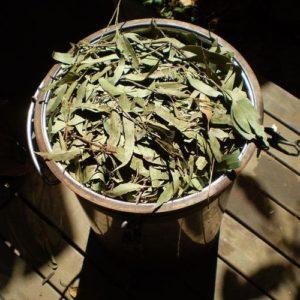 Herbal Medicine Image