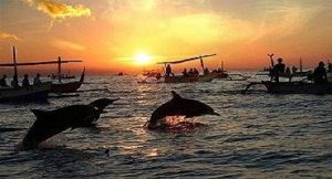 Dolphins at Lovina, Bali