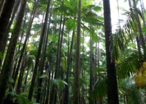 10 Interesting Facts about Jungles