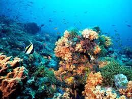 The Maya Barrier Reef