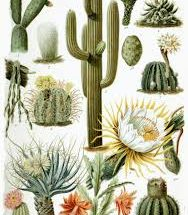 10 Interesting Facts about Cactus Plant