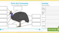 10 Interesting Facts about Cassowaries